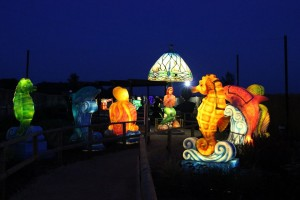 Sea creatures lit up